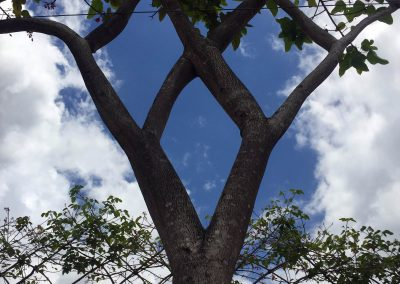 Shaped Tree