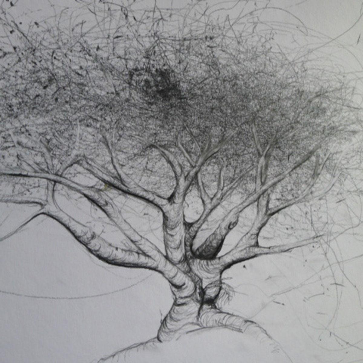 My Fig Tree